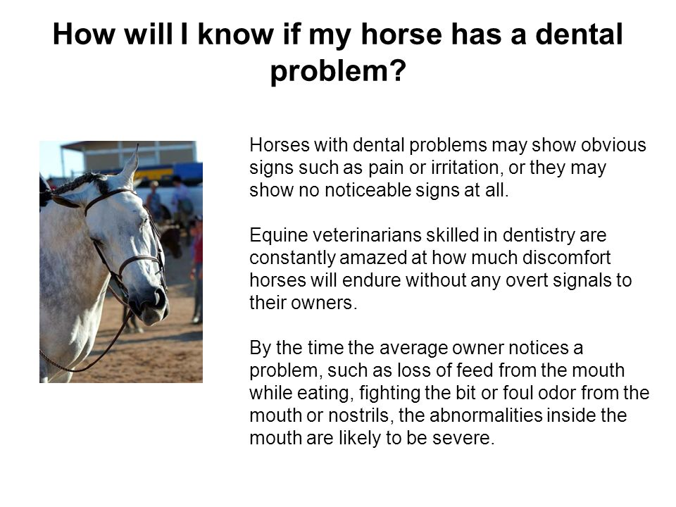 How will I know if my horse has a dental problem