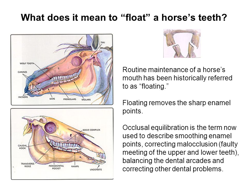 What does it mean to float a horse's teeth
