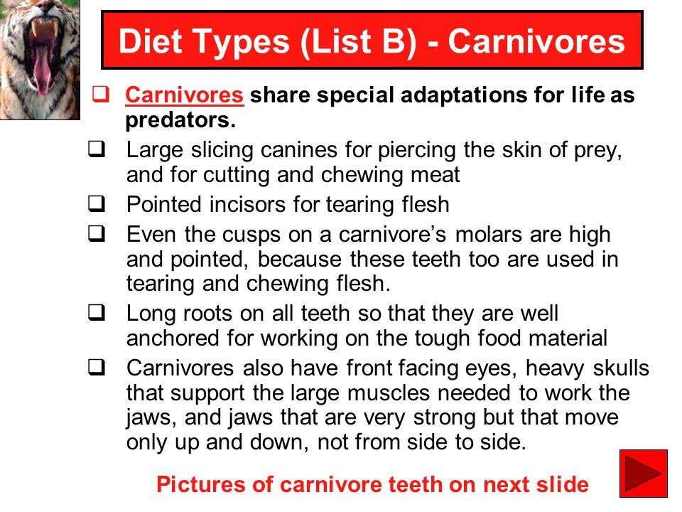 Diet Types (List B) - Carnivores