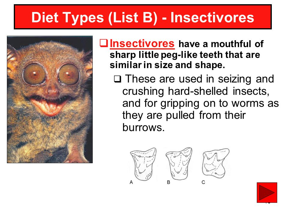 Diet Types (List B) - Insectivores