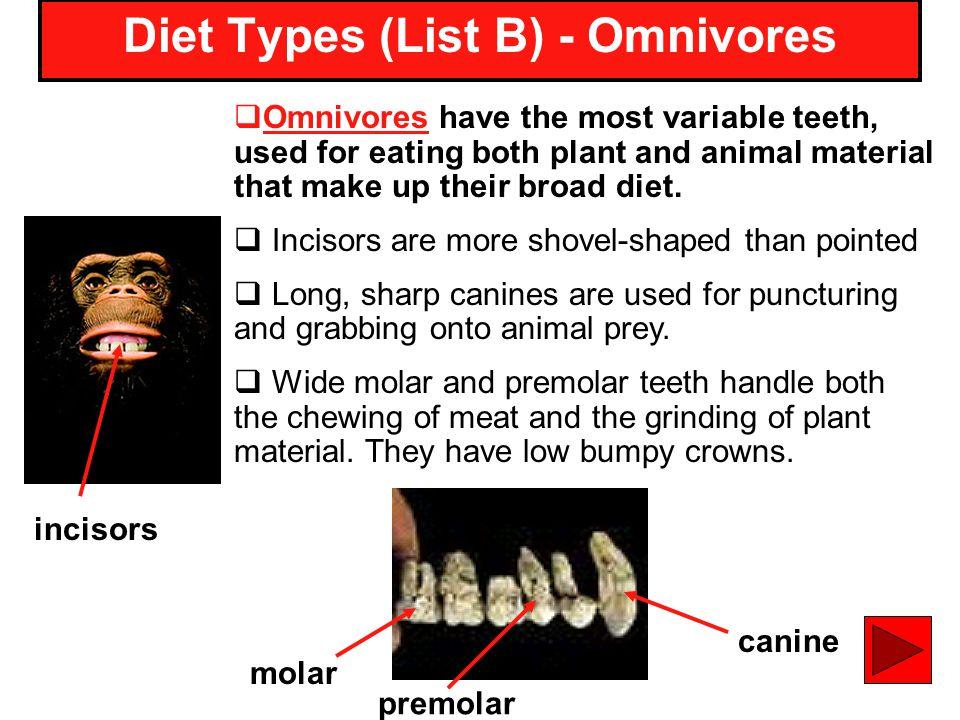 Diet Types (List B) - Omnivores
