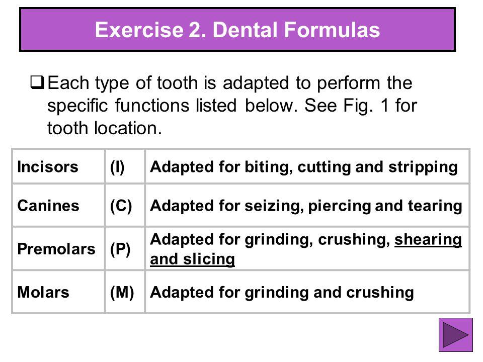Exercise 2. Dental Formulas