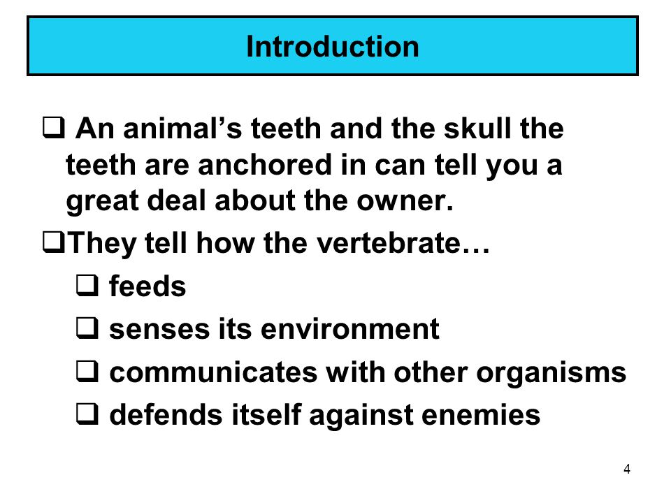 Introduction An animal's teeth and the skull the teeth are anchored in can tell you a great deal about the owner.