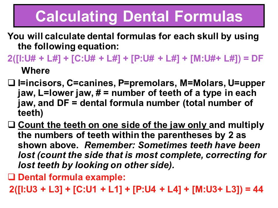Calculating Dental Formulas
