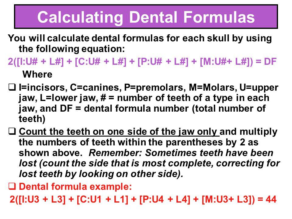 Calculating Dental Formulas