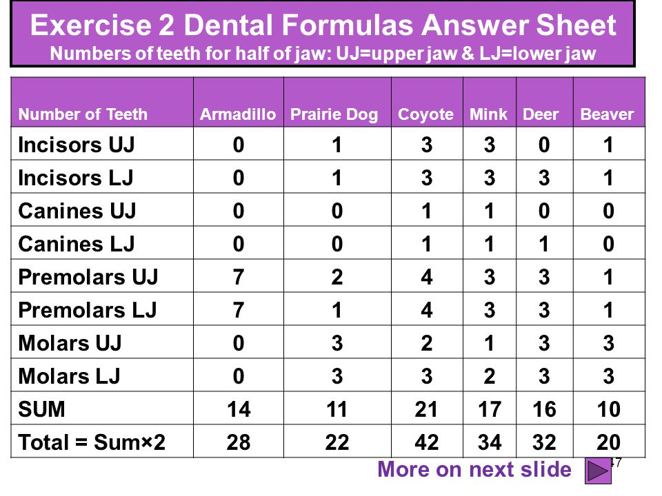 Exercise 2 Dental Formulas Answer Sheet Numbers of teeth for half of jaw: UJ=upper jaw & LJ=lower jaw