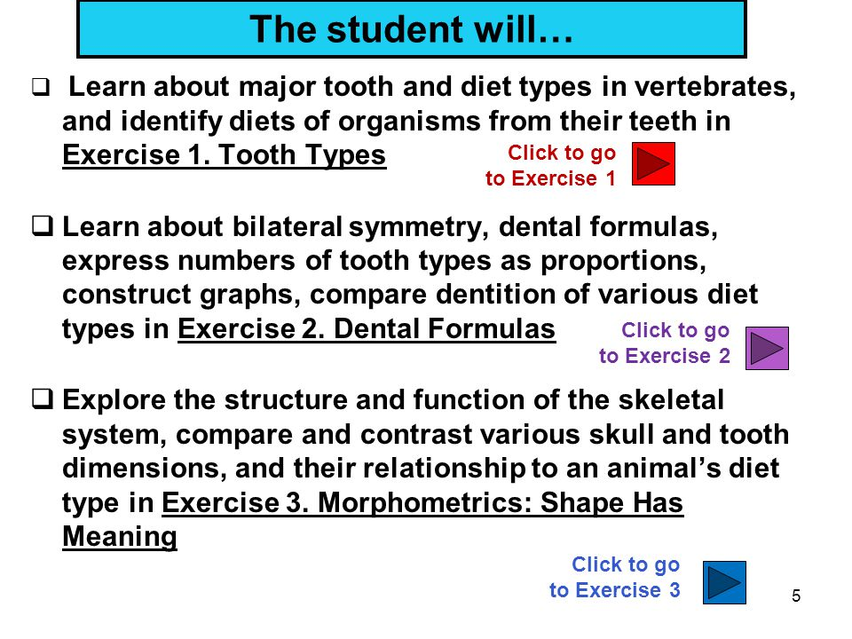 The student will… Learn about major tooth and diet types in vertebrates, and identify diets of organisms from their teeth in Exercise 1. Tooth Types.