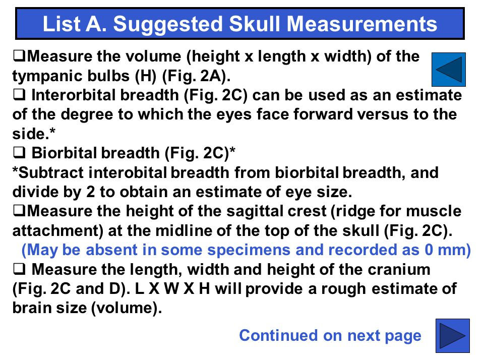 List A. Suggested Skull Measurements