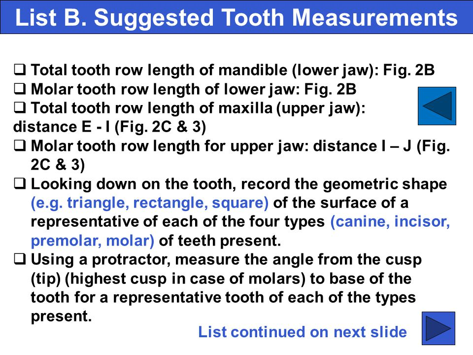 List B. Suggested Tooth Measurements
