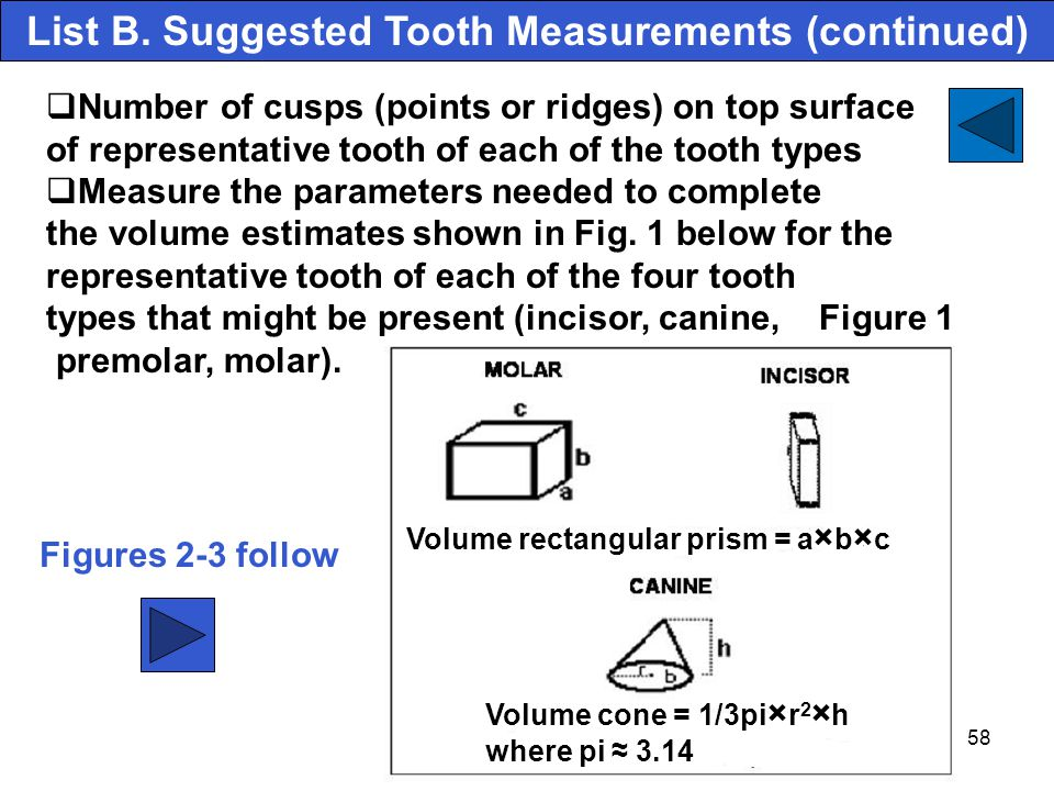 List B. Suggested Tooth Measurements (continued)