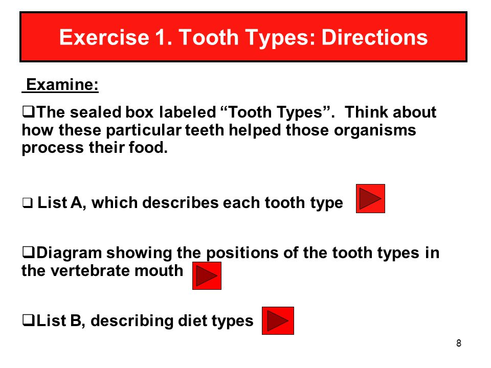 Exercise 1. Tooth Types: Directions