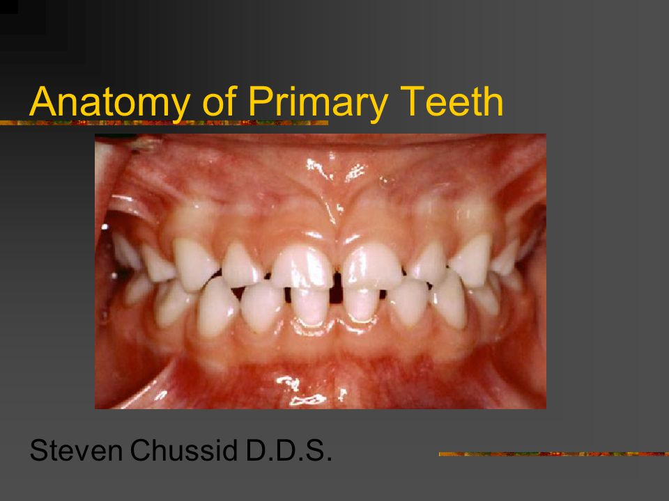 Anatomy of Primary Teeth