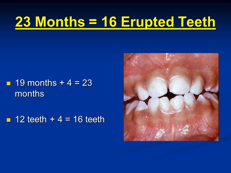 23 Months = 16 Erupted Teeth 19 months + 4 = 23 months