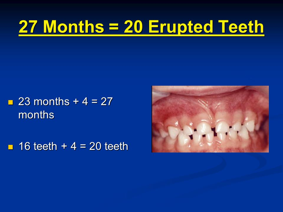 27 Months = 20 Erupted Teeth 23 months + 4 = 27 months