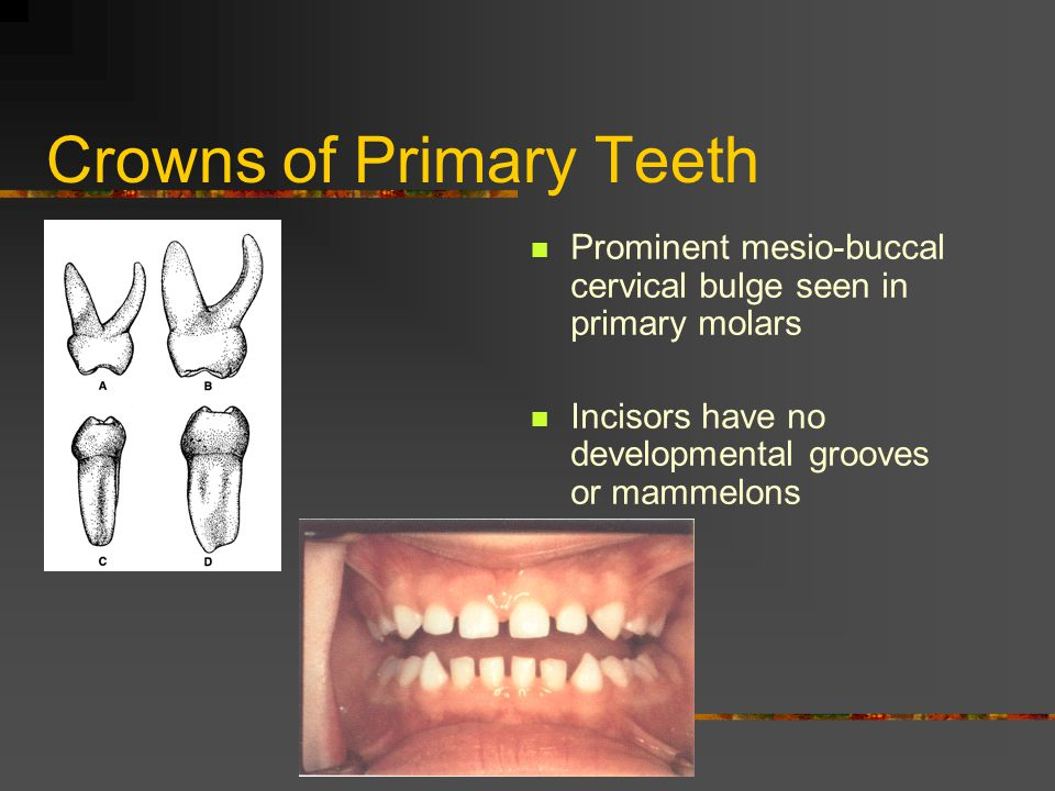 Crowns of Primary Teeth