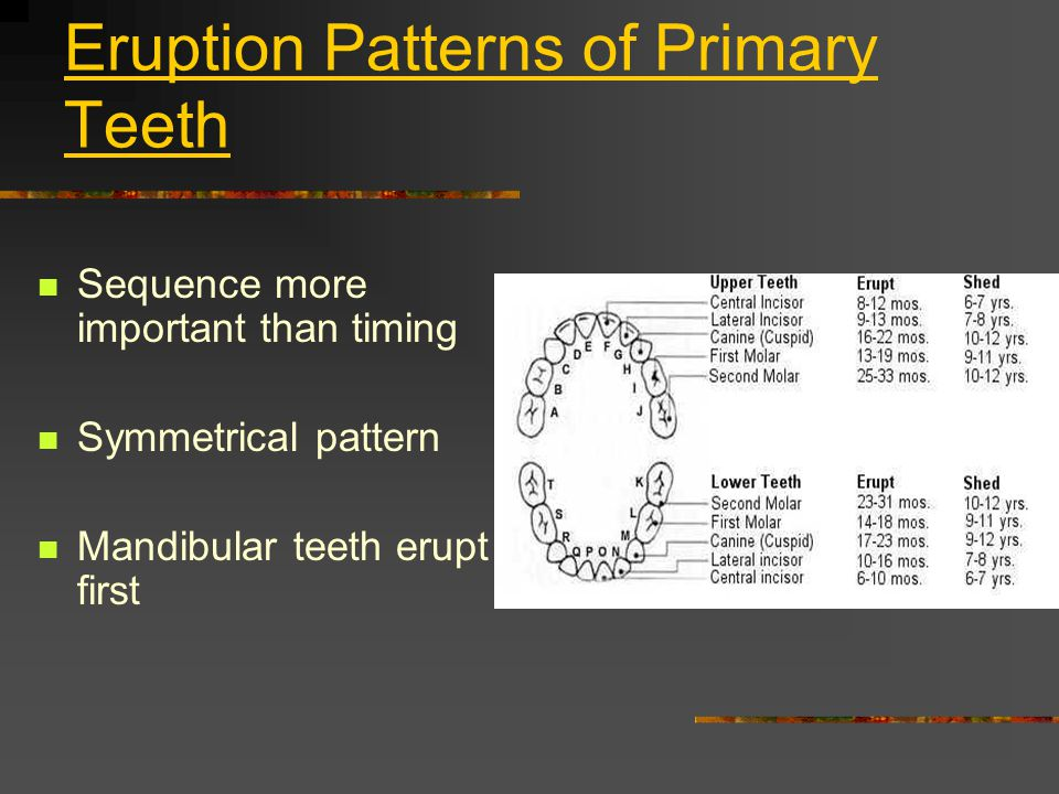 Eruption Patterns of Primary Teeth