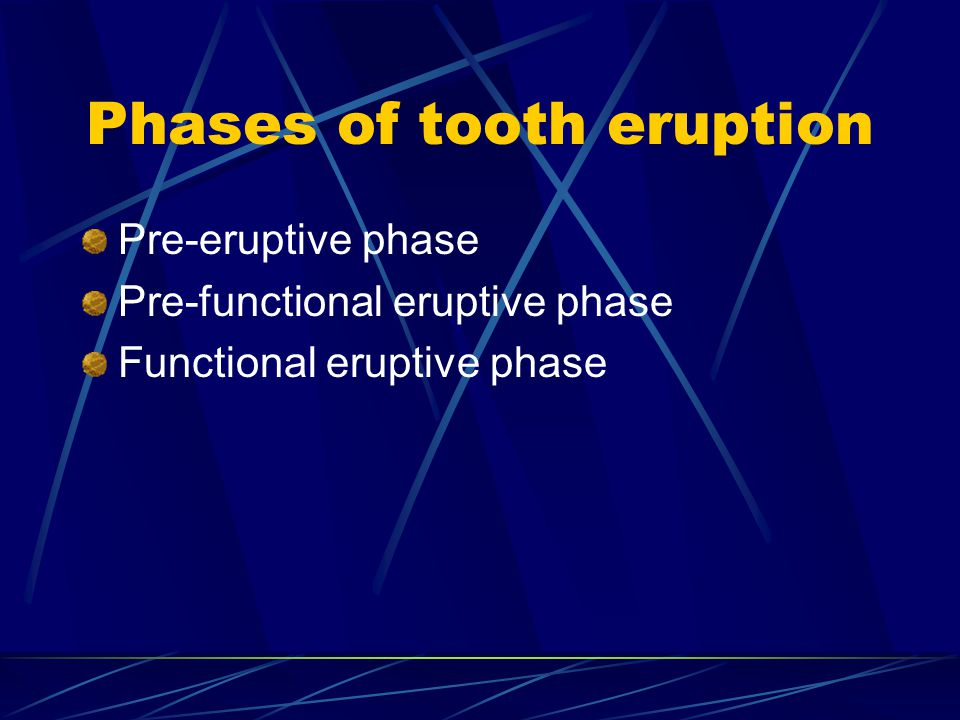 Phases of tooth eruption