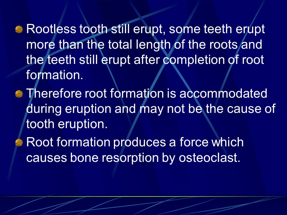 Rootless tooth still erupt, some teeth erupt more than the total length of the roots and the teeth still erupt after completion of root formation.
