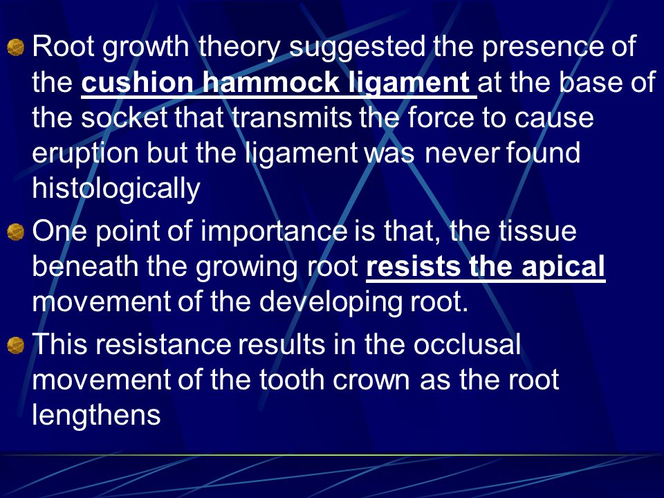 Root growth theory suggested the presence of the cushion hammock ligament at the base of the socket that transmits the force to cause eruption but the ligament was never found histologically