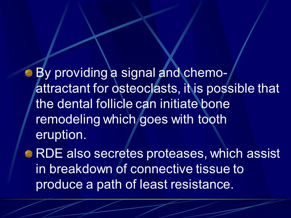 By providing a signal and chemo-attractant for osteoclasts, it is possible that the dental follicle can initiate bone remodeling which goes with tooth eruption.