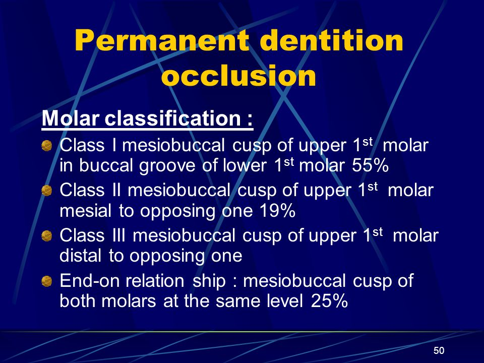 Permanent dentition occlusion