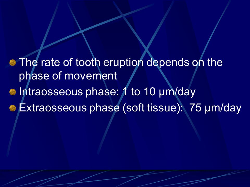 The rate of tooth eruption depends on the phase of movement