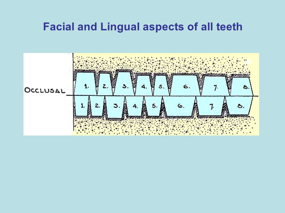Facial and Lingual aspects of all teeth