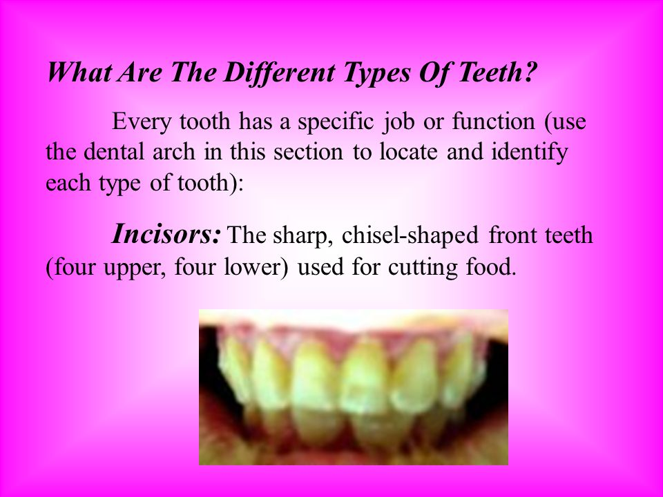 What Are The Different Types Of Teeth