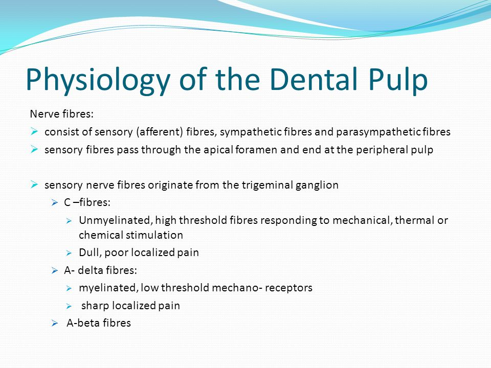Physiology of the Dental Pulp