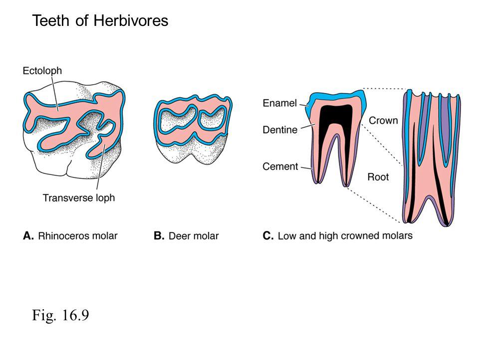 Teeth of Herbivores Fig. 16.9