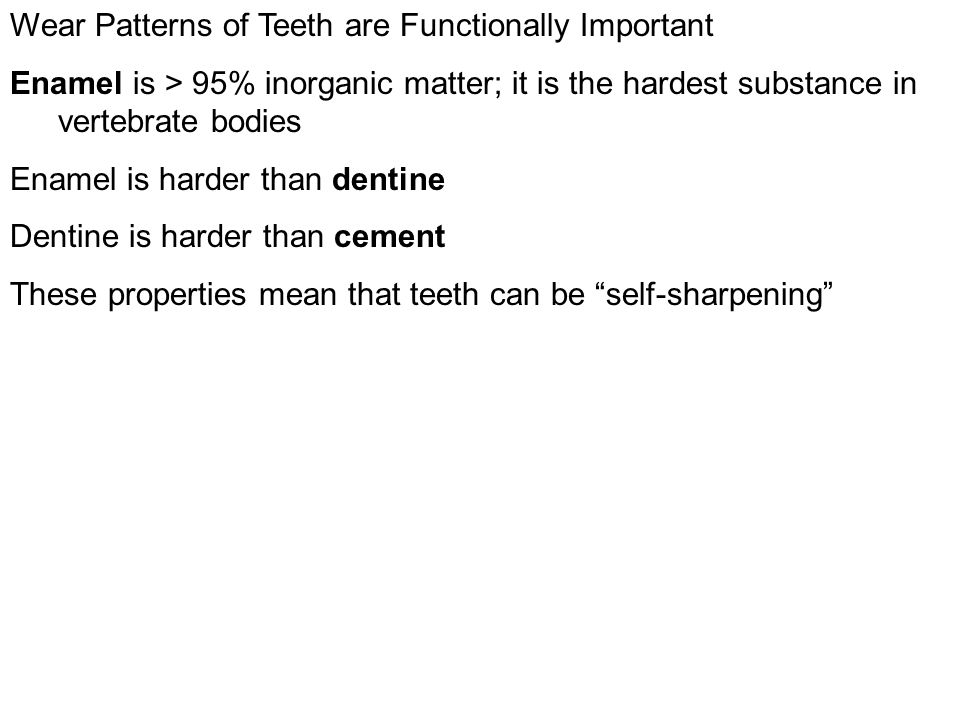 Wear Patterns of Teeth are Functionally Important