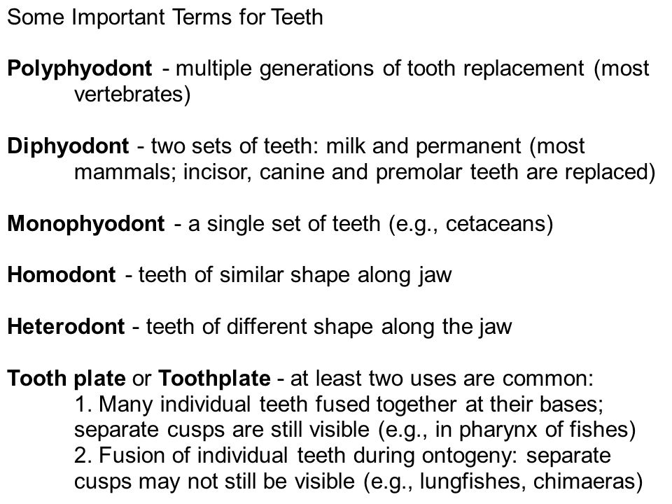 Some Important Terms for Teeth