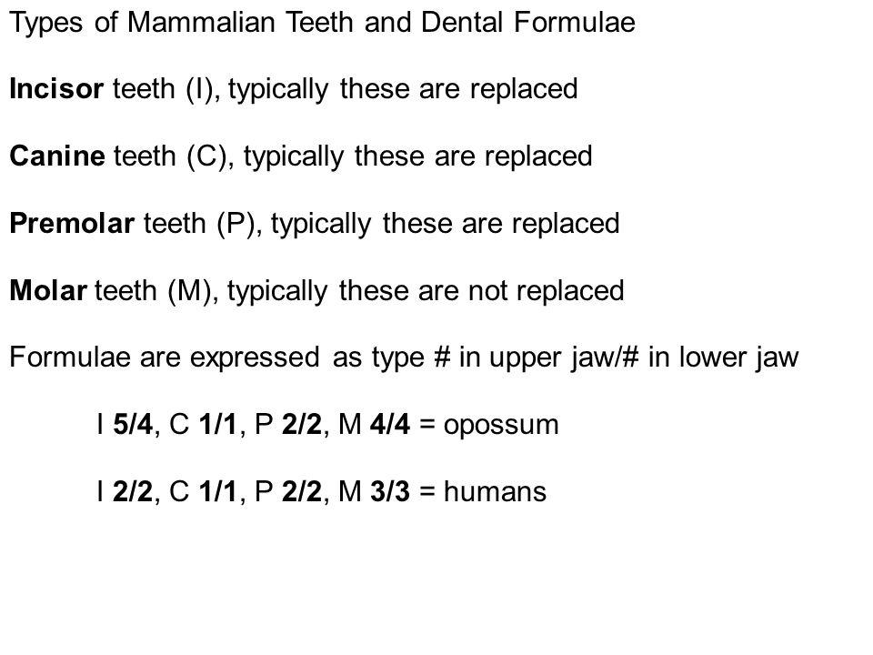 Types of Mammalian Teeth and Dental Formulae