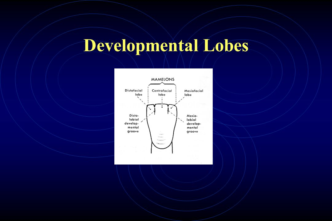 Developmental Lobes