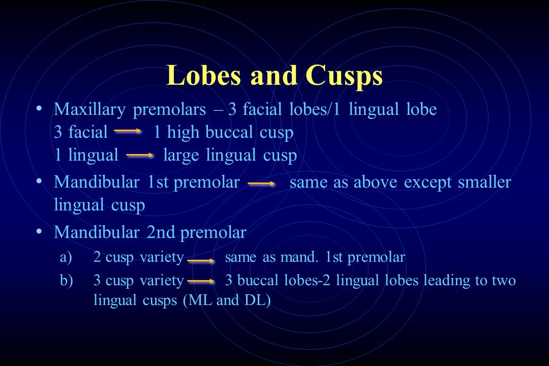 Lobes and Cusps