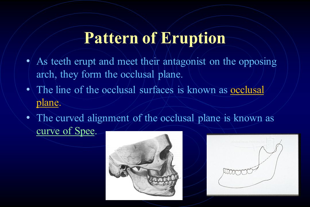 Pattern of Eruption As teeth erupt and meet their antagonist on the opposing arch, they form the occlusal plane.