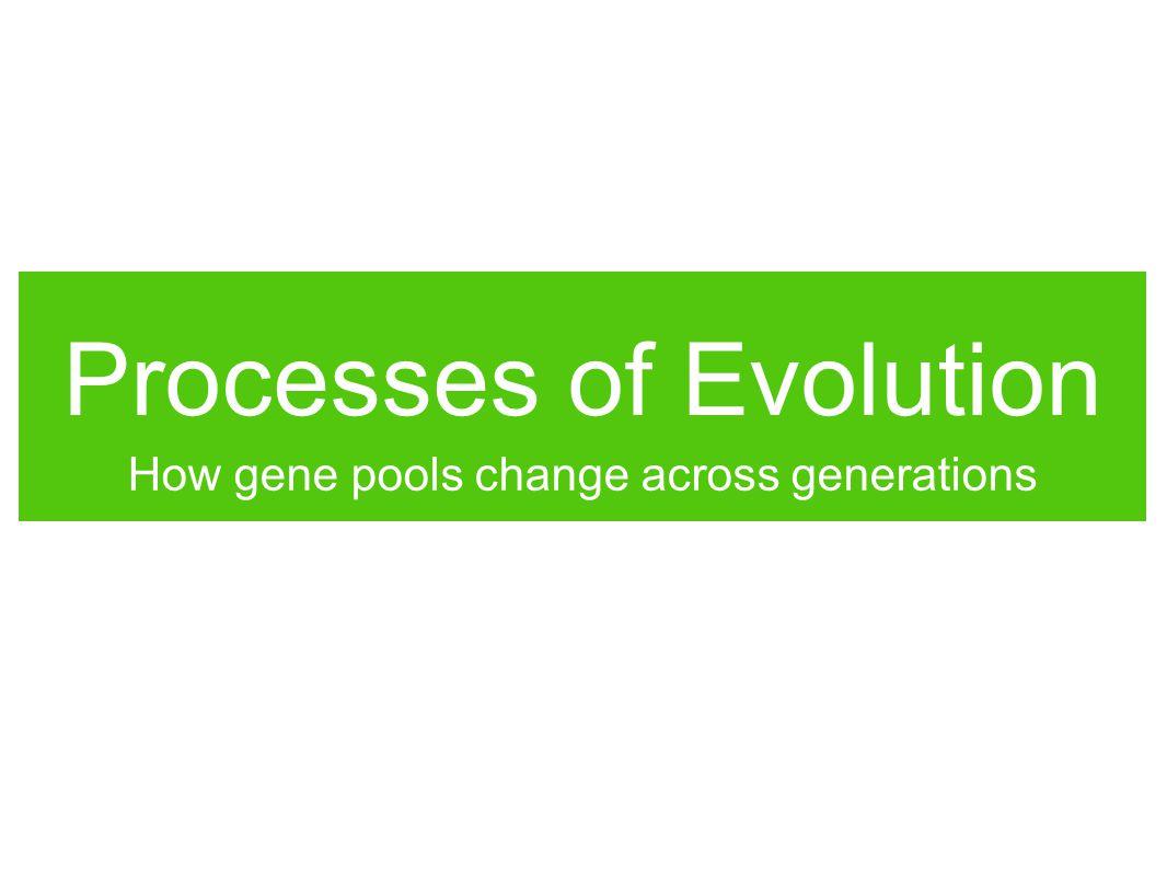 Processes of Evolution