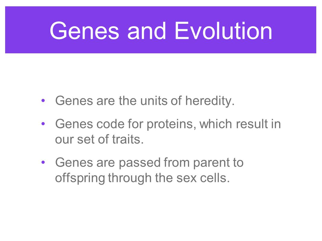 Genes and Evolution Genes are the units of heredity.