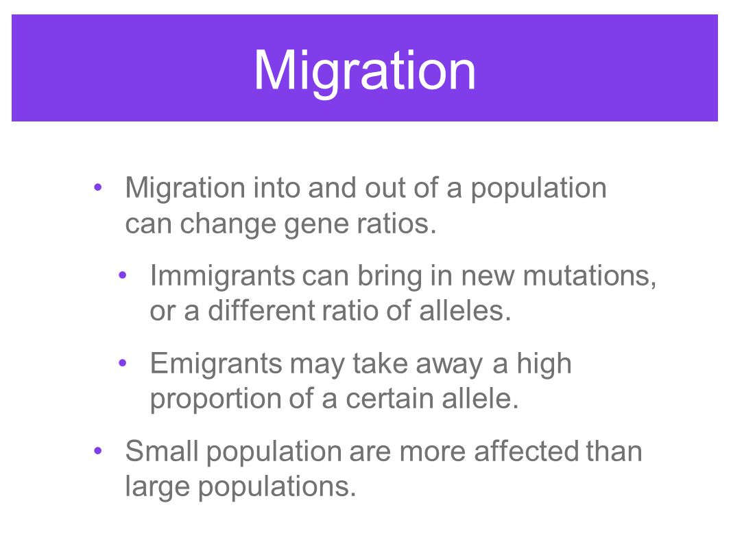 Migration Migration into and out of a population can change gene ratios. Immigrants can bring in new mutations, or a different ratio of alleles.