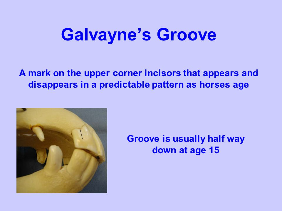Groove is usually half way down at age 15