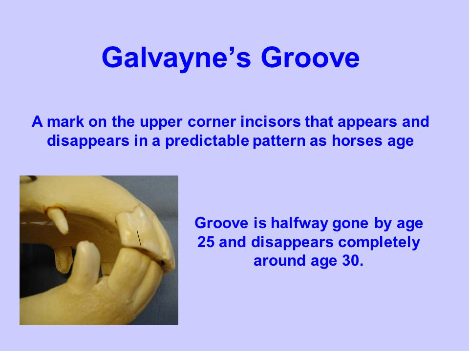 Galvayne's Groove A mark on the upper corner incisors that appears and disappears in a predictable pattern as horses age.