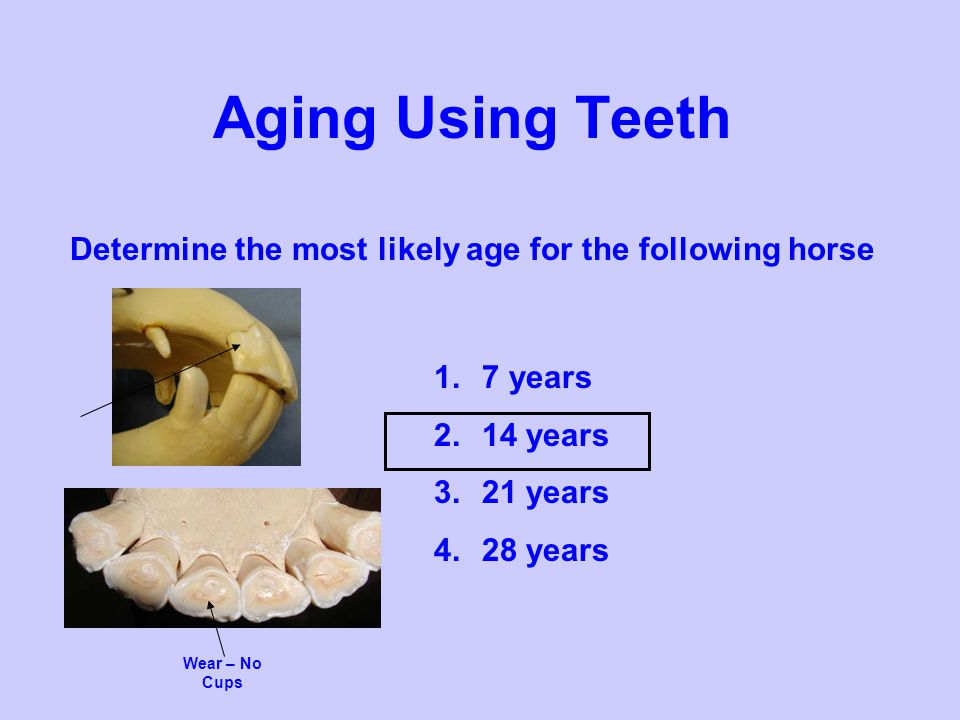 Determine the most likely age for the following horse