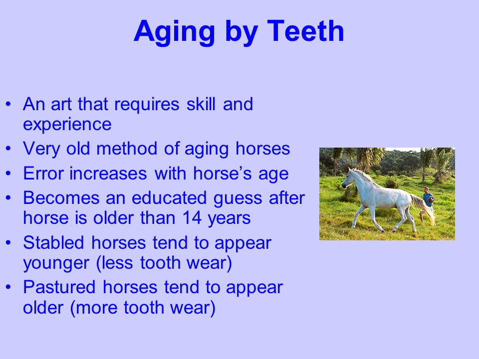 Aging by Teeth An art that requires skill and experience