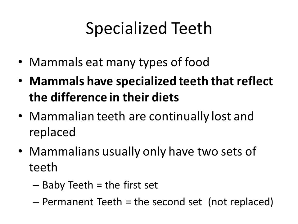 Specialized Teeth Mammals eat many types of food