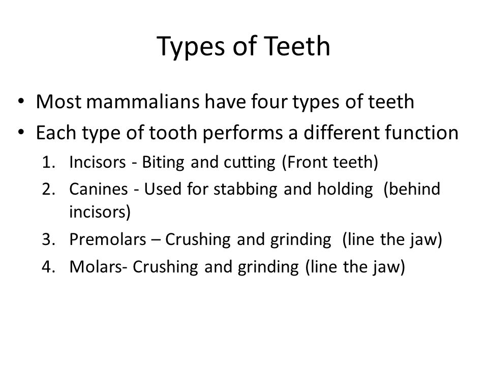 Types of Teeth Most mammalians have four types of teeth