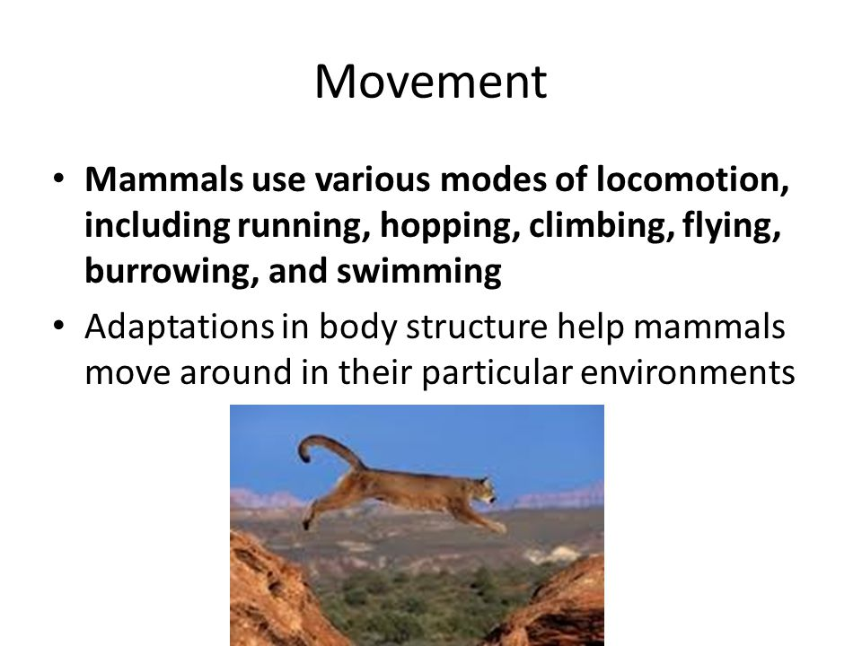 Movement Mammals use various modes of locomotion, including running, hopping, climbing, flying, burrowing, and swimming.