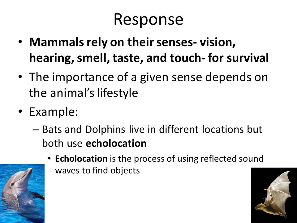 Response Mammals rely on their senses- vision, hearing, smell, taste, and touch- for survival.