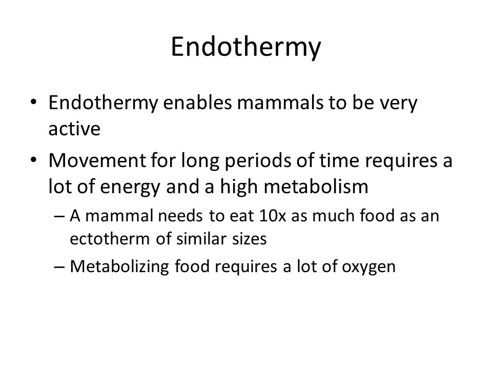 Endothermy Endothermy enables mammals to be very active