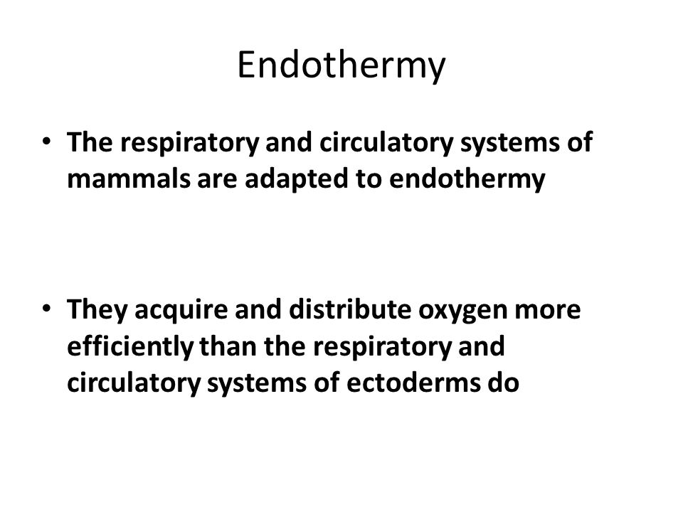 Endothermy The respiratory and circulatory systems of mammals are adapted to endothermy.