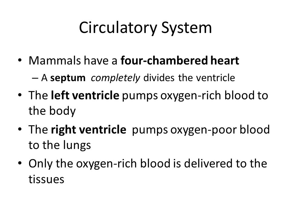 Circulatory System Mammals have a four-chambered heart